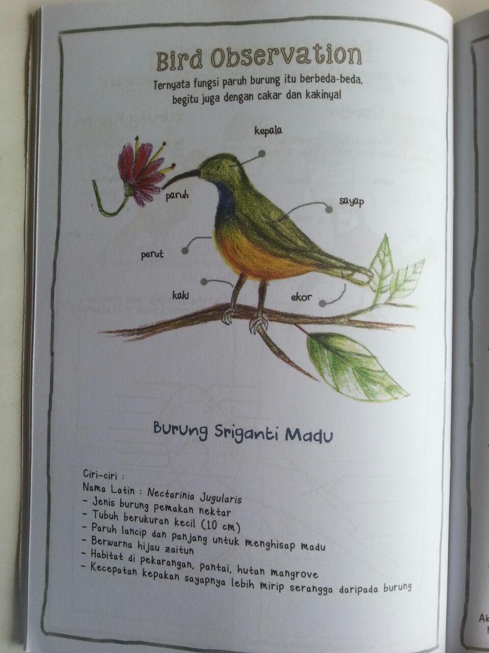 Buku Anak My Nature Journal Pengamatan Dan Gambar Ulang Di Bukuku isi 2